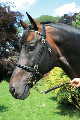 New Clincher Bridle